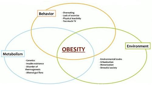 women's obesity