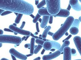 probiotics for digestive health